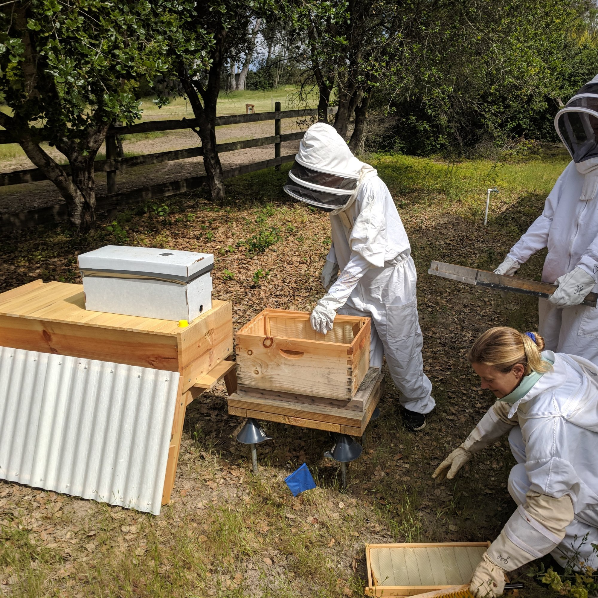 students in beekeeping suits
